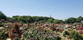 7 ガーデン全景.jpg