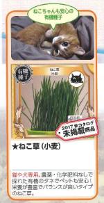 ねこ草.png