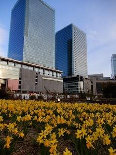 グランフロント大阪とスイセン.JPG