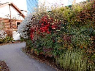 植物の壁.JPG