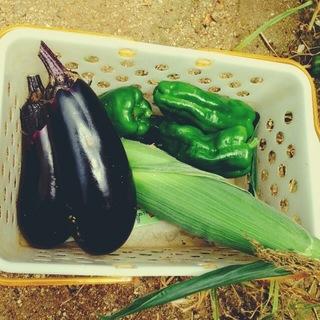 野菜収穫.JPG